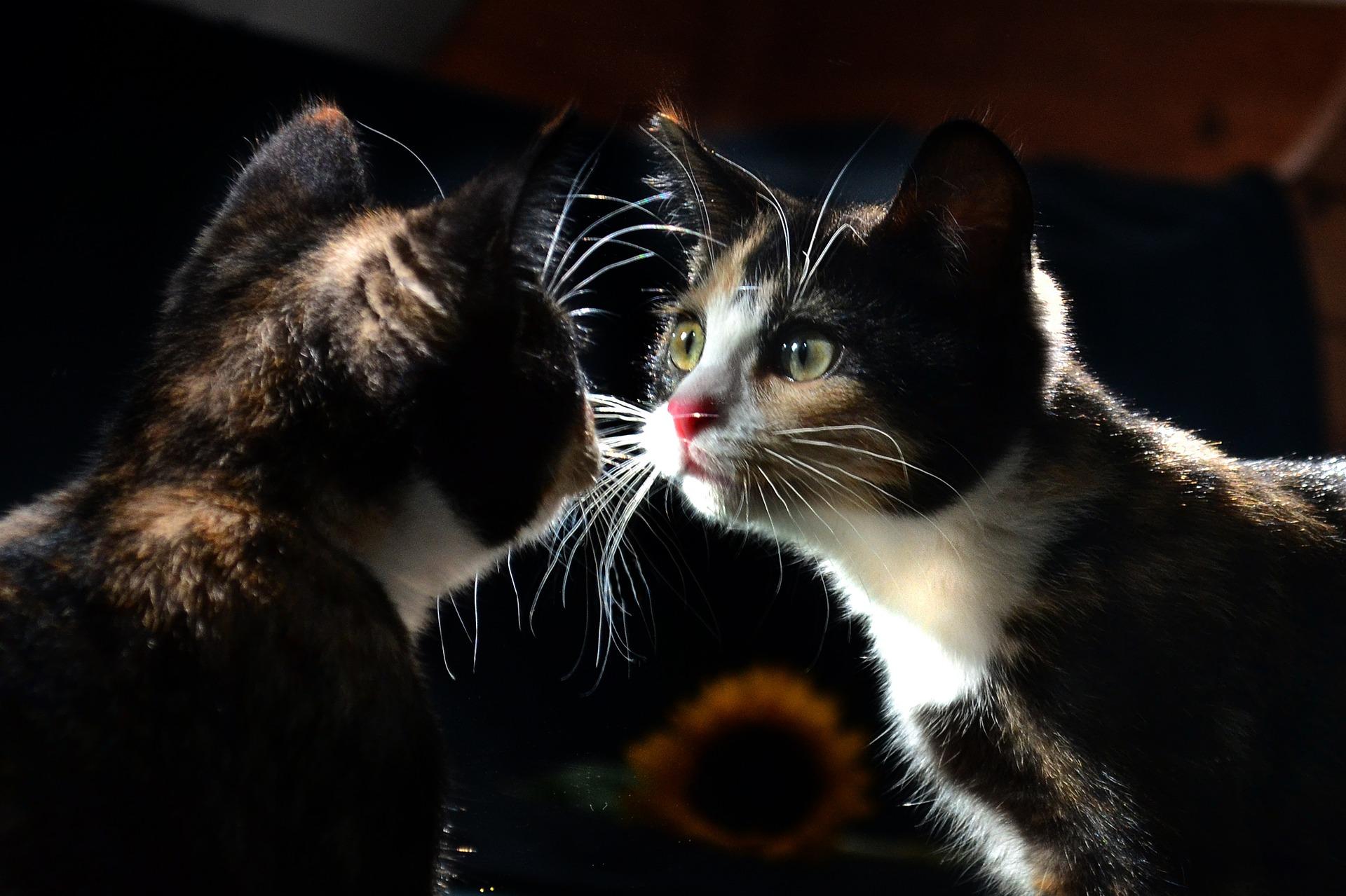 Spiegelthemen